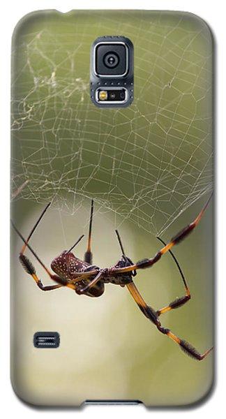 Golden-silk Spider Galaxy S5 Case