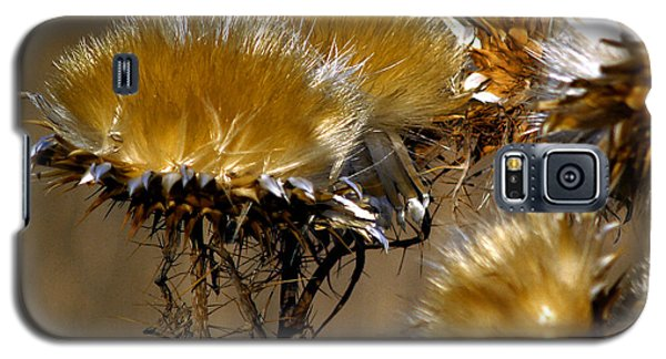 Golden Thistle Galaxy S5 Case by Bill Gallagher