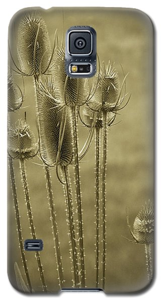 Golden Thistles Galaxy S5 Case