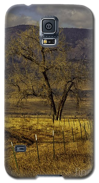 Galaxy S5 Case featuring the photograph Golden Tree by Kristal Kraft