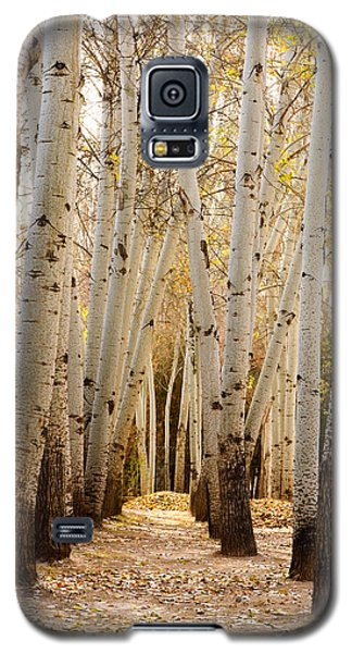 Golden Trees Dunhuang China Galaxy S5 Case