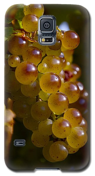 Golden Wine Grapes Galaxy S5 Case
