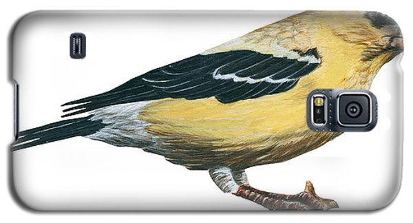 Goldfinch  Galaxy S5 Case by Anonymous