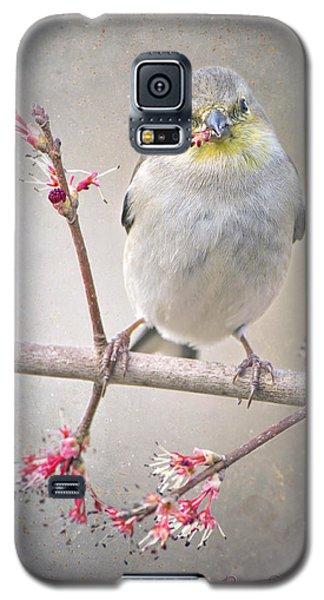 Goldfinch In Swamp Maple Galaxy S5 Case