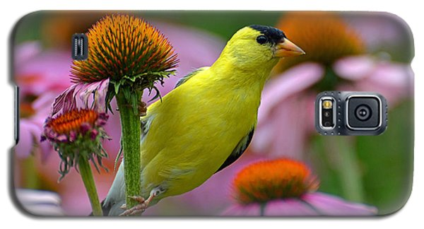 Goldfinch On A Coneflower Galaxy S5 Case