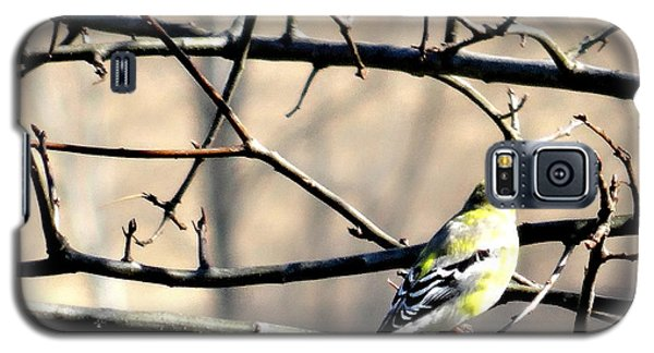 Goldfinch On Budding Branch Galaxy S5 Case