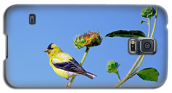 Galaxy S5 Case featuring the photograph Goldfinch On Stem by Stephen  Johnson