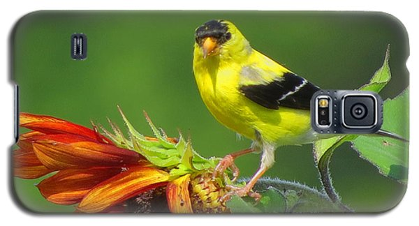 Galaxy S5 Case featuring the photograph Goldfinch Pose by Dianne Cowen