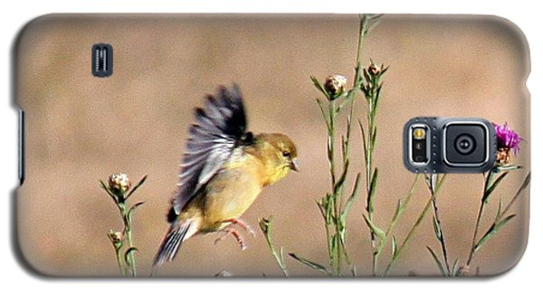 Goldfinch Quest 2 Galaxy S5 Case