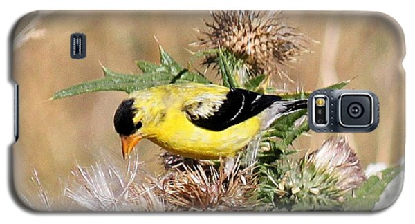 Galaxy S5 Case featuring the photograph Goldfinch Quest 3 by Erica Hanel