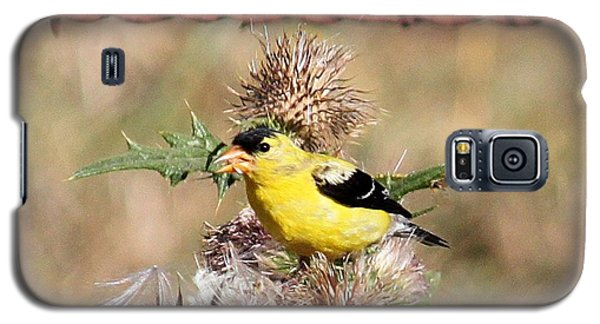 Galaxy S5 Case featuring the photograph Goldfinch Quest 4 by Erica Hanel