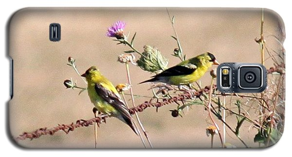 Galaxy S5 Case featuring the photograph Goldfinch Quest 5 by Erica Hanel
