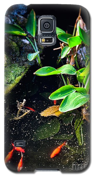Galaxy S5 Case featuring the photograph Goldfish In Pond by Silvia Ganora