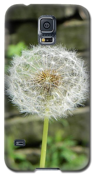Galaxy S5 Case featuring the photograph Gone To Seed by Jean Goodwin Brooks
