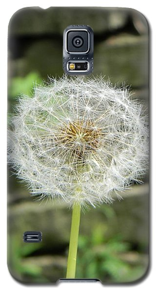 Gone To Seed Galaxy S5 Case by Jean Goodwin Brooks