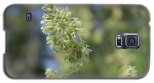 Galaxy S5 Case featuring the photograph Gone To Seed by Jesslyn Fraser