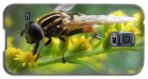 Good Guy Hoverfly  Galaxy S5 Case by Martin Howard