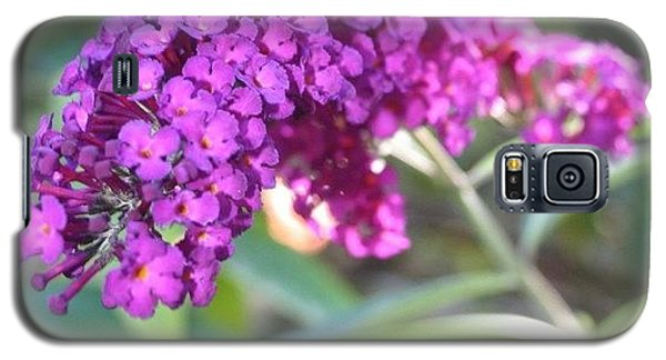Edit Galaxy S5 Case - Good Morning Purple Butterfly Bush by Anna Porter