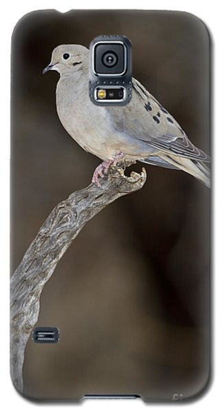 Good Mourning Galaxy S5 Case by Bryan Keil