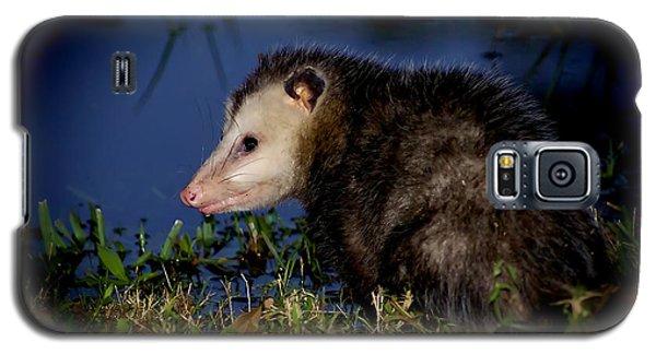 Galaxy S5 Case featuring the photograph Good Night Possum by Olga Hamilton