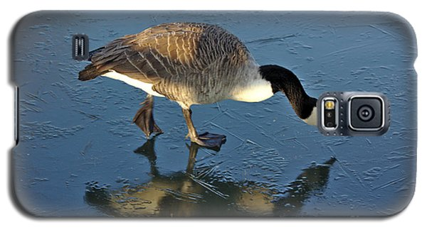 Goose On Ice Galaxy S5 Case