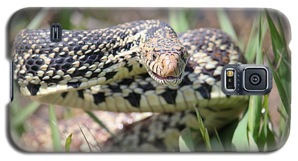 Gopher Snake Mimic Galaxy S5 Case