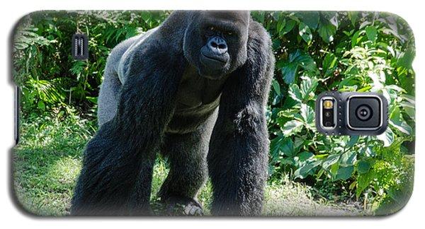 Gorilla In The Midst Galaxy S5 Case