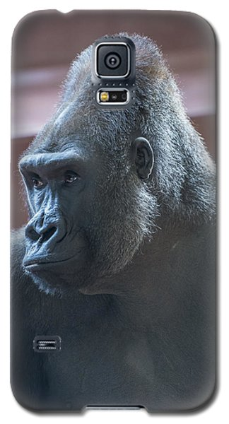Gorilla Galaxy S5 Case by Phil Abrams