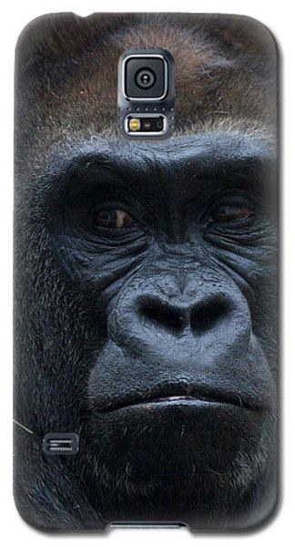 Gorilla Portrait Galaxy S5 Case