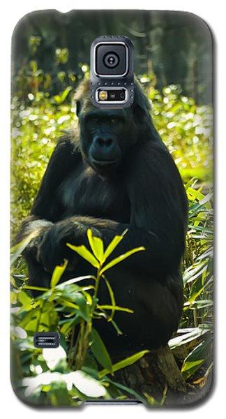 Gorilla Sitting On A Stump Galaxy S5 Case