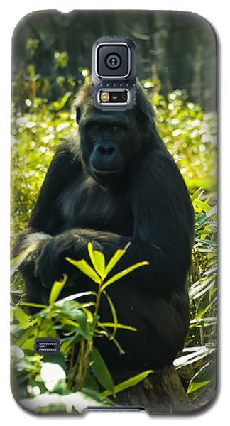 Gorilla Sitting On A Stump Galaxy S5 Case by Chris Flees
