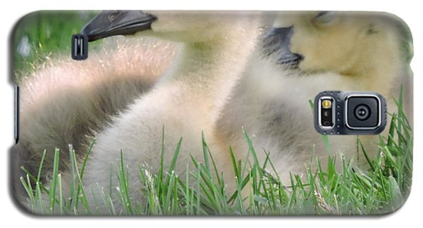 Galaxy S5 Case featuring the photograph Goslings by Peg Toliver