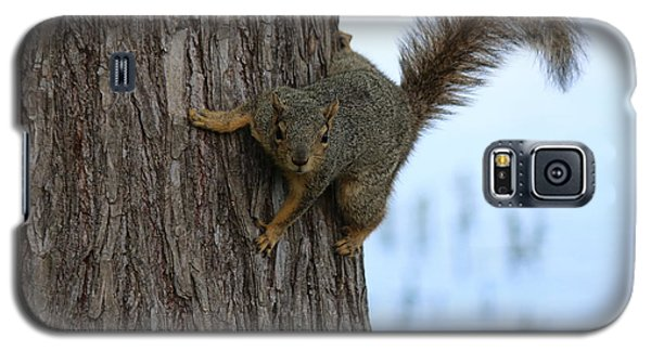 Lookin' For Nuts Galaxy S5 Case