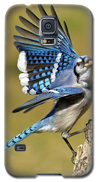 Bluejay Galaxy S5 Case - Gotta Go by Bill Wakeley