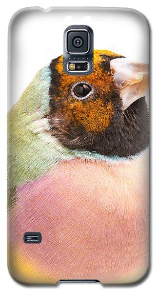 Gouldian Finch Erythrura Gouldiae Galaxy S5 Case by David Kenny