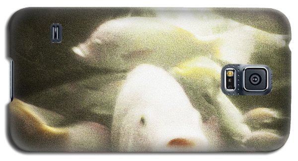 Galaxy S5 Case featuring the photograph Gouramis by Bradley R Youngberg