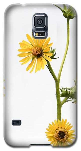 Galaxy S5 Case featuring the photograph Graceful Beauty by Anita Oakley