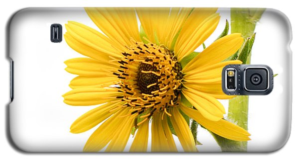 Galaxy S5 Case featuring the photograph Graceful Beauty II by Anita Oakley