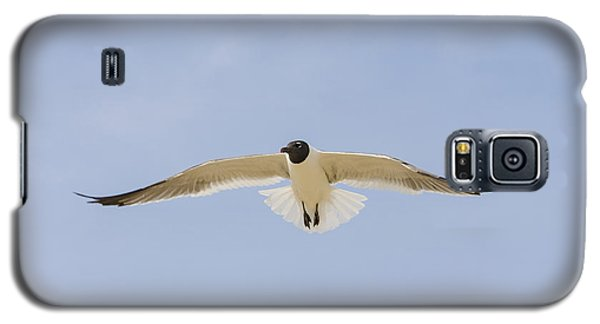 Graceful Gull Galaxy S5 Case by Bradley Clay