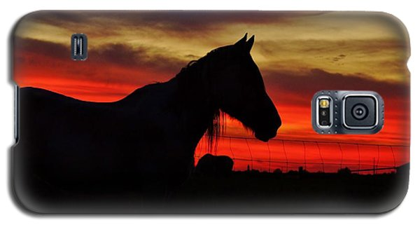 Gracie At Sunset Galaxy S5 Case by Lynda Dawson-Youngclaus