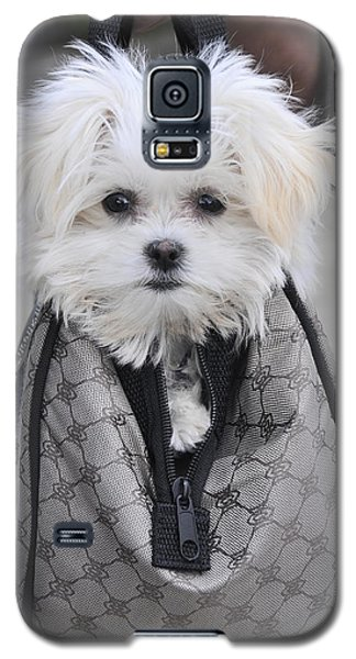 Gracie Hangin' Out Galaxy S5 Case