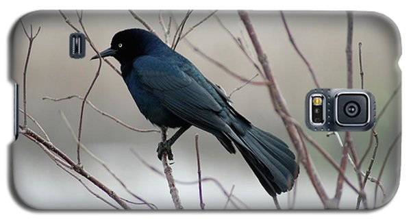 Galaxy S5 Case featuring the photograph Grackle by Kathy Gibbons