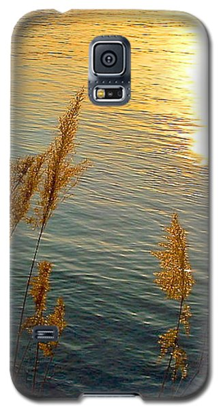 Graminees Dorees Galaxy S5 Case by Marc Philippe Joly