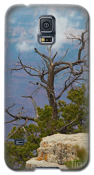 Galaxy S5 Case featuring the photograph Grand Canyon Tree by Rod Wiens