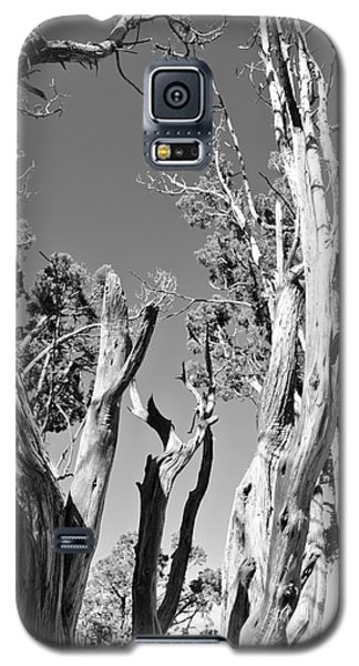 Grand Canyon Trees Galaxy S5 Case