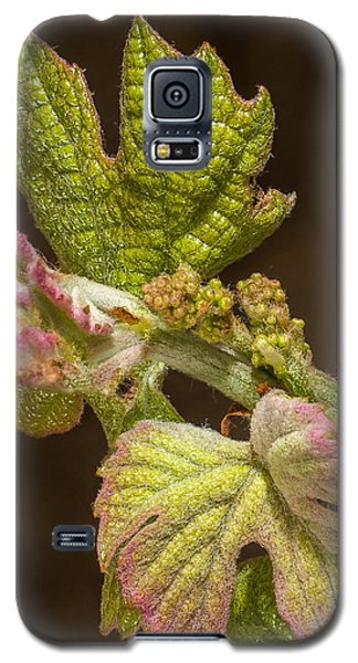 Grape Bud Break Galaxy S5 Case