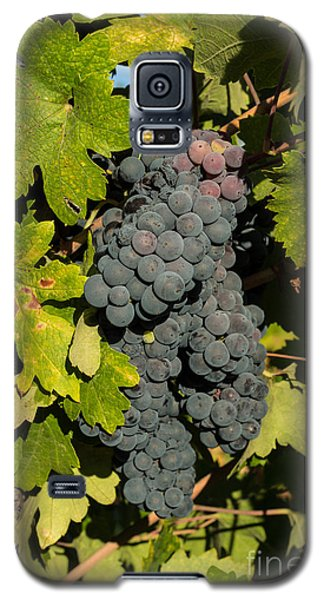 Grape Harvest Galaxy S5 Case