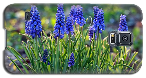 Grape Hyacinths Galaxy S5 Case