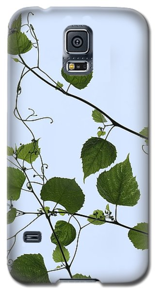 Grape Vine And Sky Galaxy S5 Case by Daniel Reed