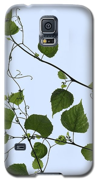 Grape Vine And Sky Galaxy S5 Case